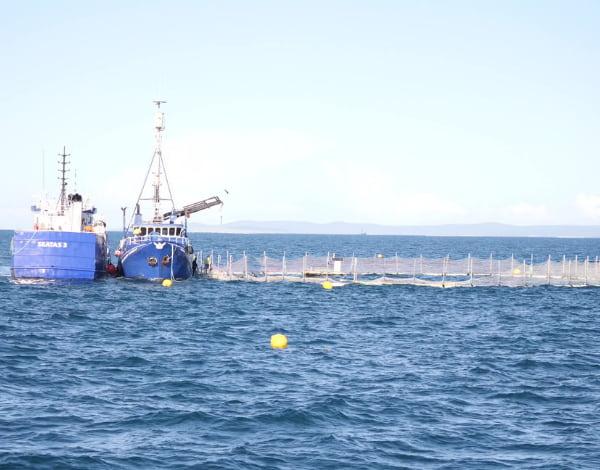 Ships harvesting tuna