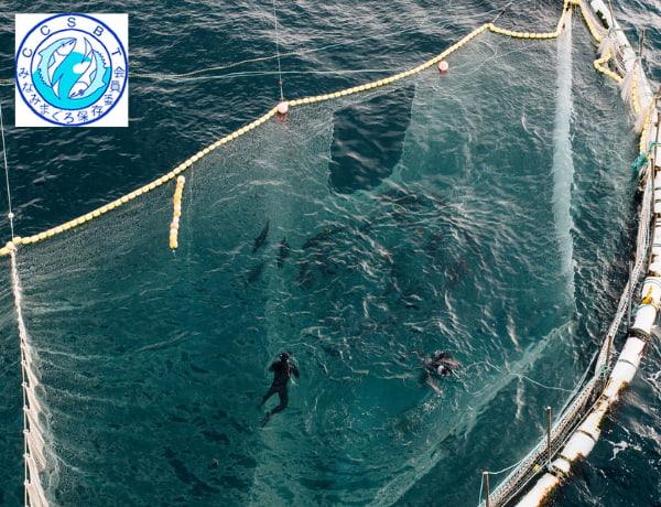 Men swimming on the ocean catching tunas