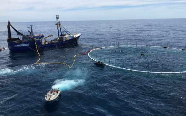 Ship and boat harvesting tuna