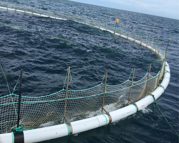 Tuna farm