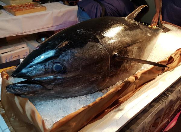 Fresh Bluefin Tuna placed on an ice